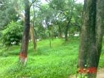 Bangladesh, bangla nature, free stock pictures, nature, image, picture, free download photo, free download picture, free download image, naraongonj, free download bangla nature, Wallpaper, free download wallpaper, free wallpaper, free picture, free photo, free nature, about bangladesh, bangladeshi picture, world pictures, beauti of world, balur par, Balu  river, md. Aman Ullah,balu, faysal's photo, photography